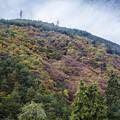 岐阜の山中は紅葉が綺麗