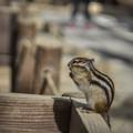 Photos: 栗鼠の合掌