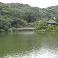 横浜の三渓園の池が緑で埋め尽くされていた頃