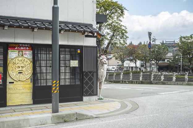Photos: 「アルパカ一番」が覗く人間用のマタタビを売ってる店