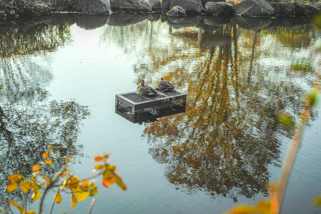Photos: 晩秋の寛ぎ
