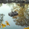 写真: 晩秋の寛ぎ