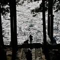写真: 箱根神社の鳥居