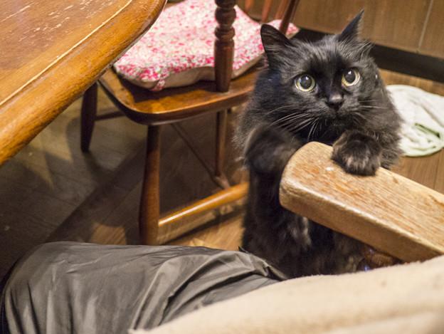 甘える黒猫