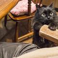 Photos: 甘える黒猫
