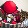 Photos: さるぼぼさんとコーディネートしてみた猫