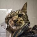 Photos: べりべりべり、猫の頭が