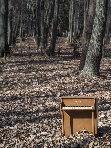 Photos: ようこそ、音楽の森へ