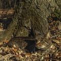 Photos: 保護色猫