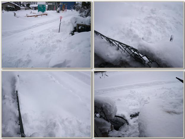 雪が凄いので