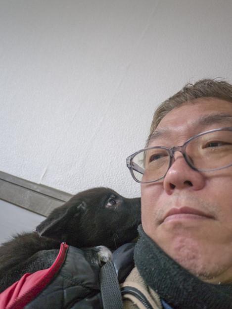 里親捜し@ボーダーコリーと紀州犬の合いの子1