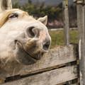 むふふ~ん、、脱力系最強のゆるキャラ風生きた馬の表情