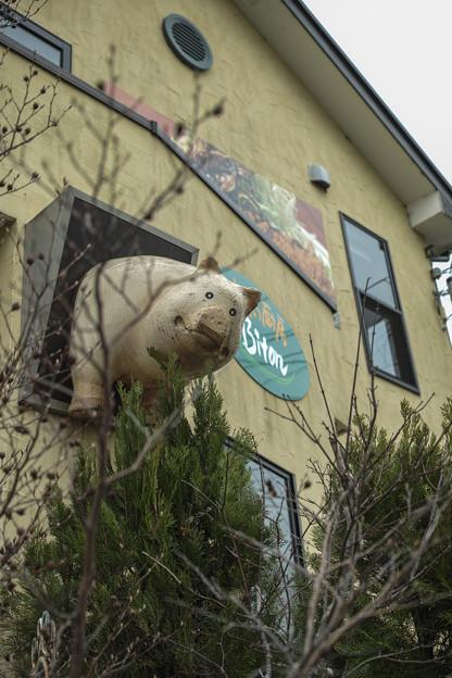 飛び出た豚