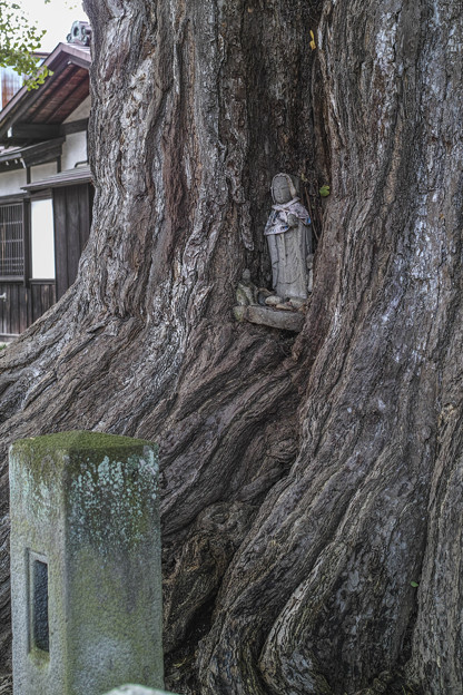 大銀杏の根元には仏さんが@飛騨国分寺