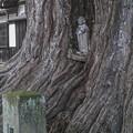 Photos: 大銀杏の根元には仏さんが@飛騨国分寺