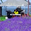 2013河口湖ハーブフェスティバル34「素敵なBGM」
