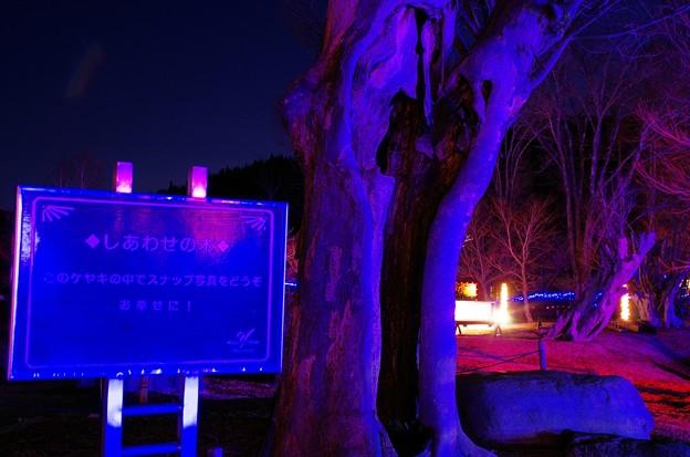 2013山中湖アートイルミネーション ファンタジウム番外04