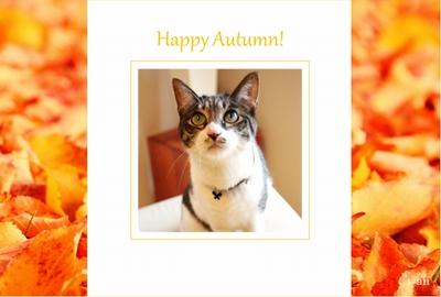 Photos: orange autumn-sample