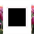 Photos: spring-tulip