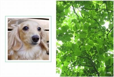 spring-green-sample