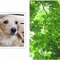 Photos: spring-green-sample