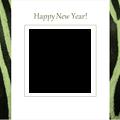 2014zebra1-olive