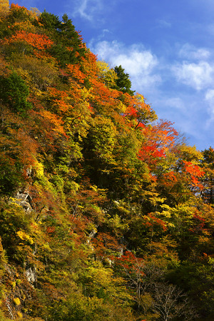 中津峡の紅葉