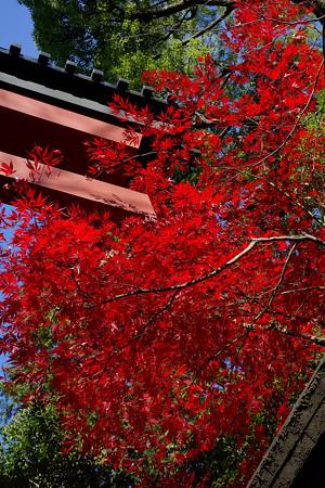 氷川神社入り口の紅葉