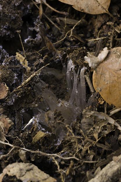 一般的な霜柱