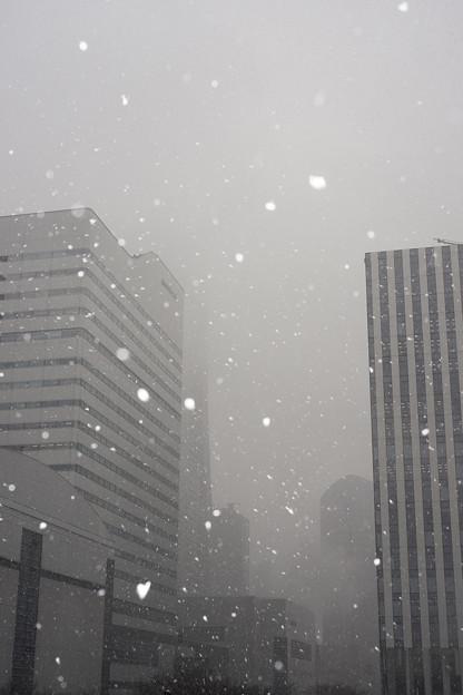Photos: WHITE ALBUM in 横浜