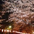 上野夜桜 -Cybershot RX100-