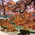 Photos: 新宿御苑の紅葉