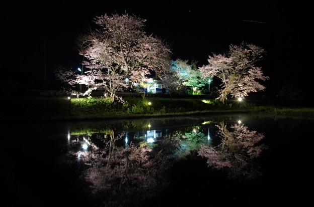 飯給駅夜桜