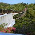 写真: いわき公園 森のわくわく橋...