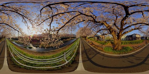 2013年3月25日 長尾川河畔 桜 360度パノラマ写真