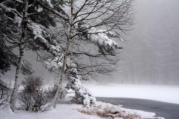 降り積もる雪