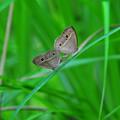 Photos: 蝶の秘め事^^
