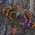Photos: 紫が綺麗^^