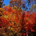 写真: 中禅寺湖畔の紅葉、見頃^^