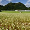 Photos: 2012蕎麦の里(牧野)