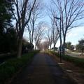 写真: 130202 尾根緑道
