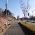 写真: 130317 尾根幹線