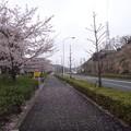 写真: 130330 連光寺坂