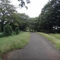 写真: 130926 尾根緑道