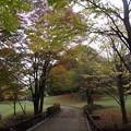 写真: 131102 一本杉公園