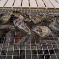 写真: 海の駅しおじ   牡蠣 BBQ