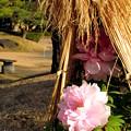 浜離宮恩賜庭園