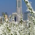 イタリア山庭園~ランドマークタワー
