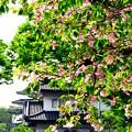 和田倉噴水公園~皇居
