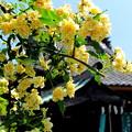 写真: 巽神社